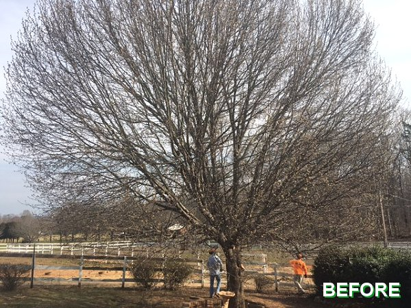 Improve the Appearance and Health of Your Trees
